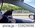 ドライブ 黒柴 53929096