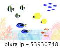 熱帯魚 海水魚 いろいろ 53930748