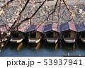 長良川の屋形船と桜 53937941