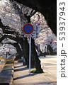長良川温泉の桜並木 53937943