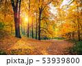 公園 森林 林の写真 53939800