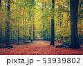 公園 森林 林の写真 53939802