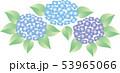 紫陽花 53965066