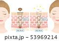 ターンオーバー 肌の断面図と女性 53969214