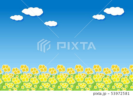 菜の花畑 53972581