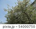エゴノキの花 54000750
