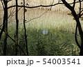 るり沼 みどろ沼、五色沼 裏磐梯 秋 自然 54003541