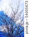 春を待つ、ハナミズキの裸木 54005673
