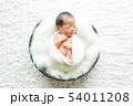 ニューボーンフォト (生後2週間程の新生児) 54011208