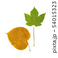 Set of Dry Leaves Isolated on White Background 54015323