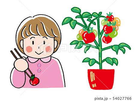 女の子とトマト 54027766