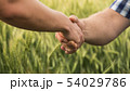 A firm handshake between two male farmers on the background of a wheat field. 54029786