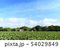 畑(初夏) 54029849