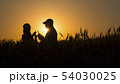 Two grain growers working in a wheat field at sunset. 54030025