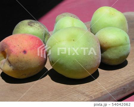 加賀梅の実を収穫しました。 54042062