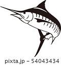 カジキ 54043434