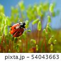 てんとう虫 テントウムシ 天道虫の写真 54043663