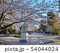 公園の桜 54044024