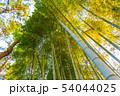 竹林 54044025