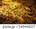 落ち葉の絨毯 54044027