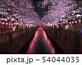 目黒川の夜桜 54044035