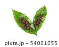 roasted coffee bean with leave on white background 54061655