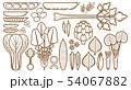野菜_バリエーション 54067882