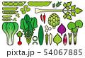 野菜_バリエーション 54067885