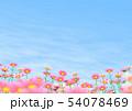 コスモス 秋桜 コピースペース 54078469