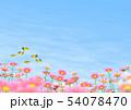 チョウ(イメージ) コスモス 秋桜 コピースペース 54078470