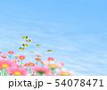 チョウ(イメージ) コスモス 秋桜 コピースペース 54078471