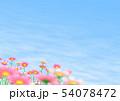 コスモス 秋桜 コピースペース 54078472
