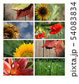 Nature banners for your design 54083834