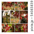 Autumn plants collection for your design 54083839