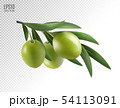 Green olive branch isolated on transparent background as package design composition. Photo-realistic 54113091
