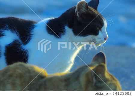 路上の猫 54125902