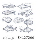 Set of isolated river and ocean fish sketches 54127200