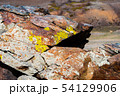 Yellowish lichens growing on light gray rock 54129906