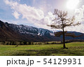 incredible landscape of a tree standing on the background of the peaks of the Altai mountains and 54129931
