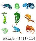 Chameleons in different poses color illustrations set 54134114