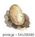 水彩画 野菜 馬鈴薯のイラスト 54138380