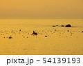 有明海の昆布漁 54139193
