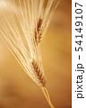 大麦 54149107