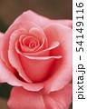 植物 バラ 花 54149116