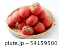 完熟トマト 54159500