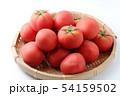 完熟トマト 54159502