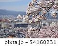 満開の桜と眼下の町並み 54160231