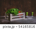 Fresh basil leaves in a rustic wooden garden box with red tomatoes on a branch and mezzaluna knife 54165816