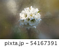 white flower on blurred background 54167391