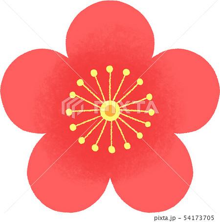 梅の花のイラスト 54173705